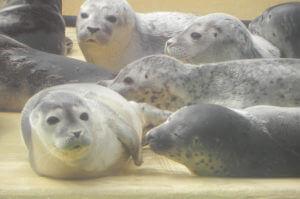 Nordseereise_OÖ_Stmk_Sbg_Malteser Reisen MHDA Ostfriesland Norddeich Seehundestation